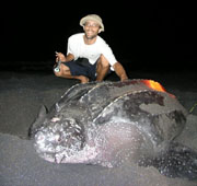 turtle leatherback dominica