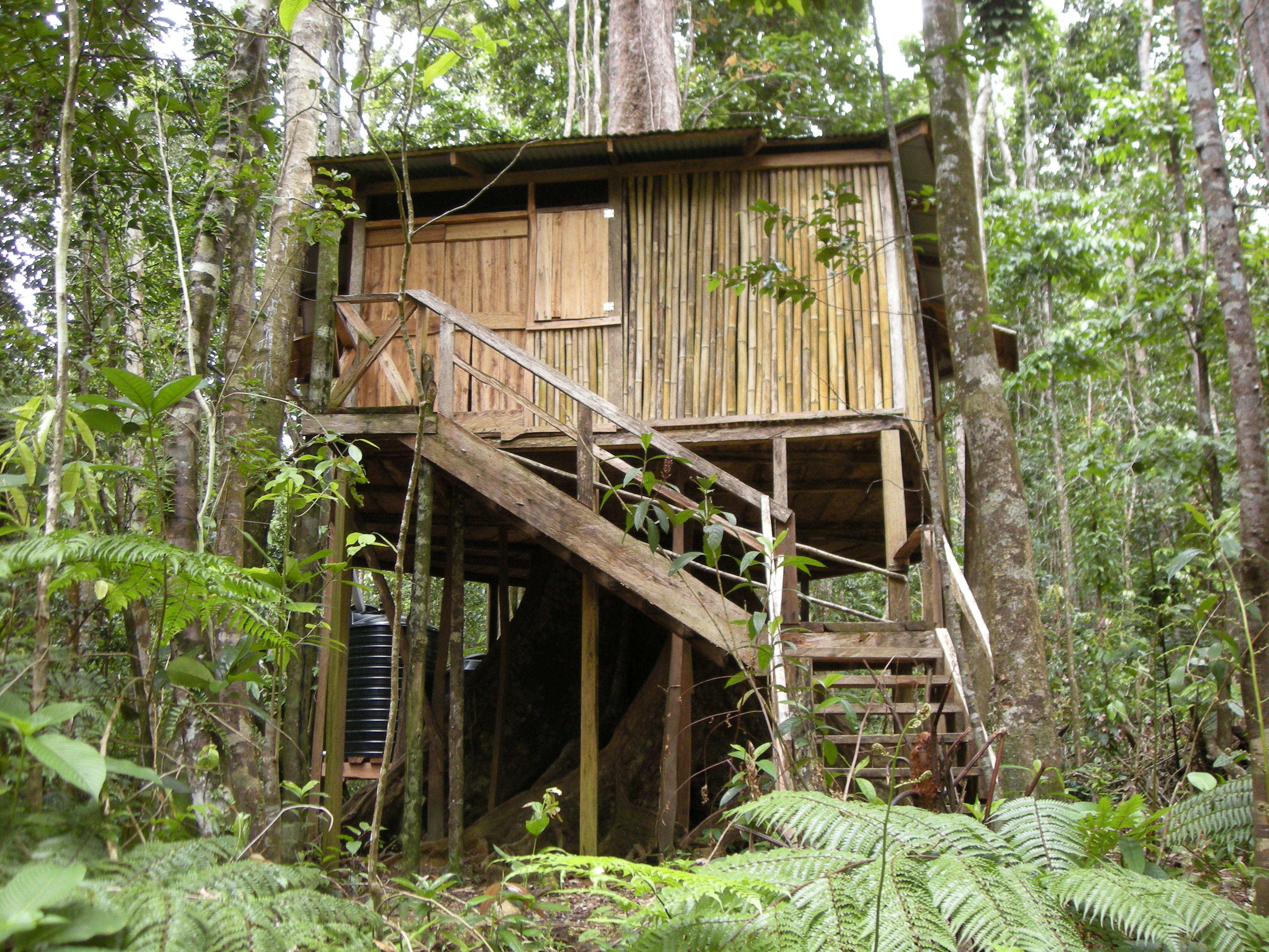 Chataniere Lodge Tree House Welcome To Rosalie Forest Eco Lodge